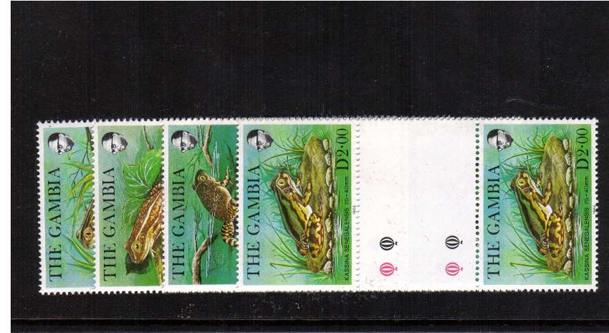 Frogs set of four in superb unmounted mint gutter pairs