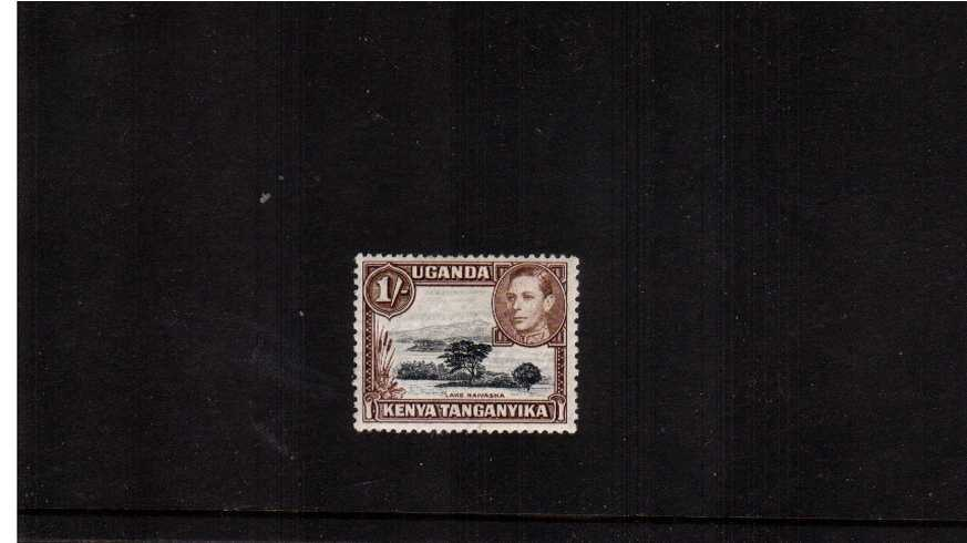 1/- Black and Brown definitive single - Perforation 13x11¾.<br/> A fine lightly mounted mint single.