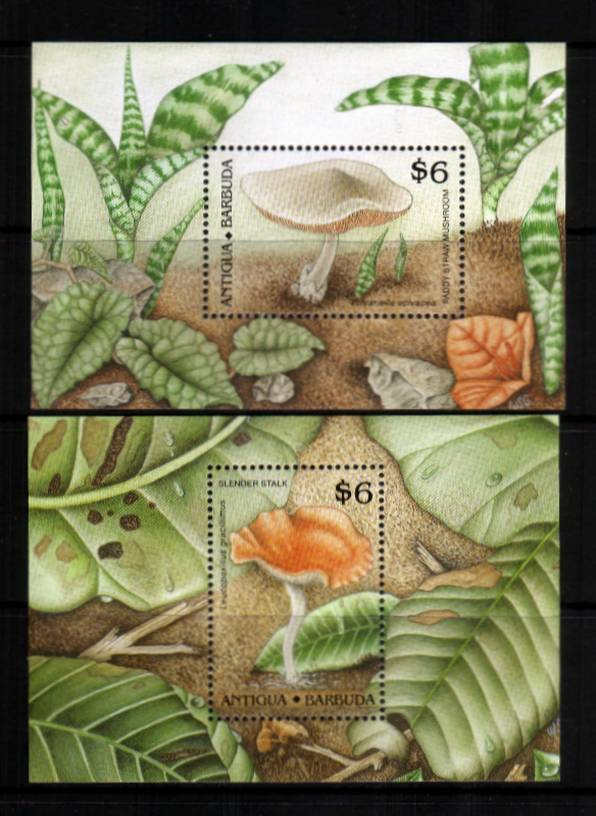 Funghi - Mushrooms<br/>